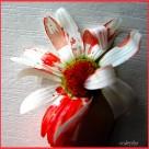 Цветы не гибли